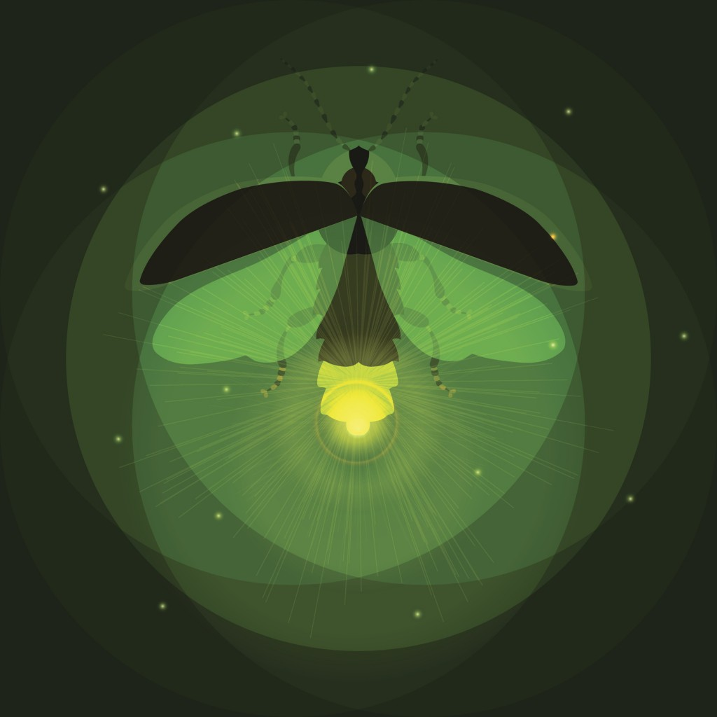 Glowing firefly- vector illustration